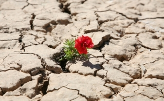 red_flower_growing_out_of_crack_in_rocks1